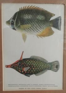 natural-history-fish